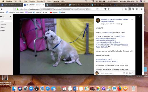 AUSTIN 3 aka IAN Screen Shot 2018-09-03 at 9.09.56 AM