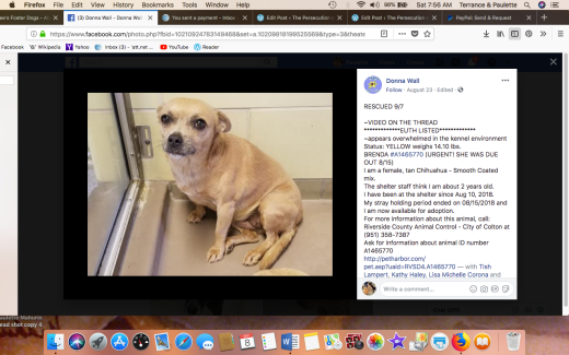 BRENDA 2 RESCUED Screen Shot 2018-09-08 at 7.56.09 AM