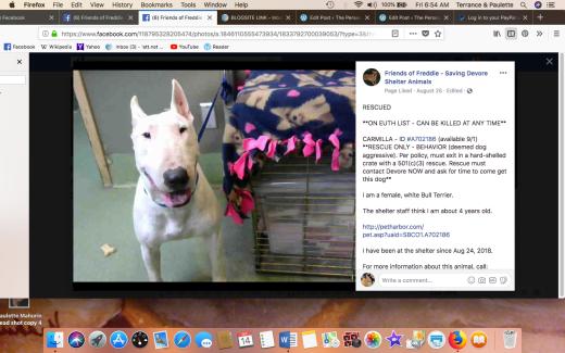 CARMILLA RESCUED Screen Shot 2018-09-14 at 6.54.16 AM