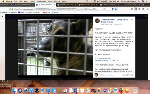 DAHLIA 2 RESCUED Screen Shot 2018-09-09 at 9.40.08 AM