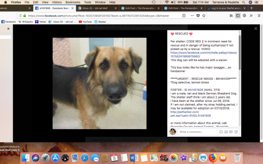 FOSTER HAS BEEN RESCUED Screen Shot 2018-09-08 at 7.14.54 AM