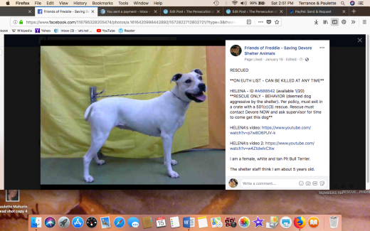 HELENA 2 RESCUED Screen Shot 2018-09-15 at 2.51.55 PM