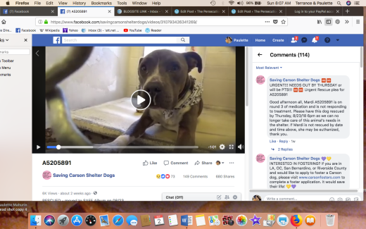 MARDI RESCUED Screen Shot 2018-09-02 at 8.07.06 AM