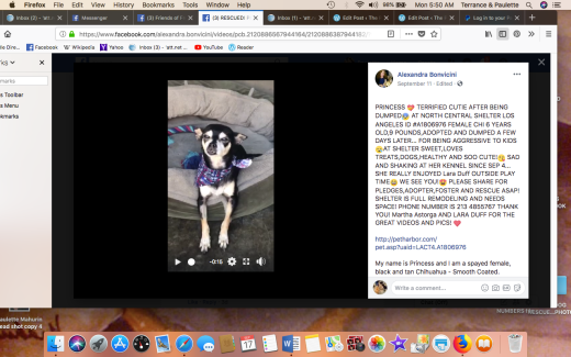 PRINCESS 6 RESCUED Screen Shot 2018-09-17 at 5.50.57 AM