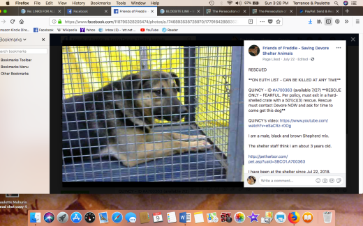 QUINCY 4 RESCUED Screen Shot 2018-09-09 at 3.28.48 PM