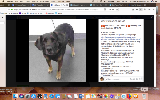 Rosco 2 RESCUED Screen Shot 2018-09-30 at 7.22.15 AM