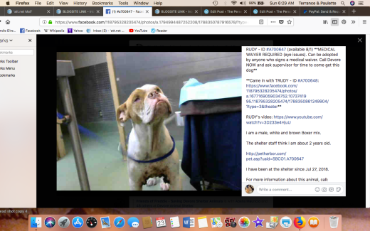 RUDY 2 RESCUED Screen Shot 2018-09-23 at 6.29.06 AM