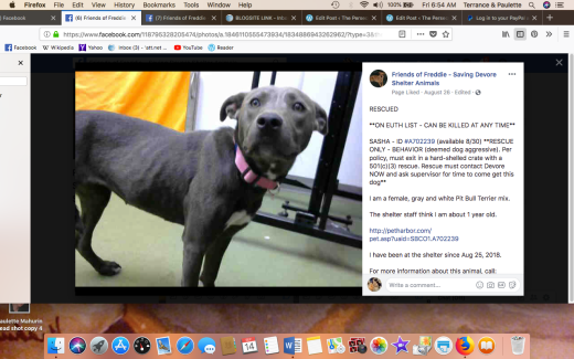SASHA 2 RESCUED Screen Shot 2018-09-14 at 6.54.45 AM