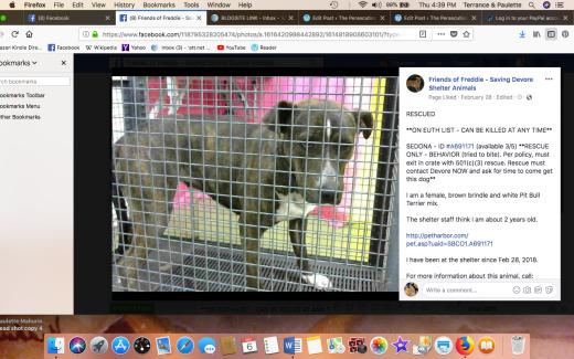 SEDONA RESCUED Screen Shot 2018-09-06 at 4.39.09 PM