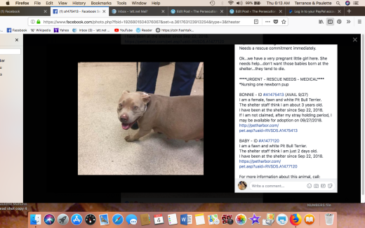 Bonnie 4 & 1 puppy Screen Shot 2018-10-04 at 6.13.26 AM