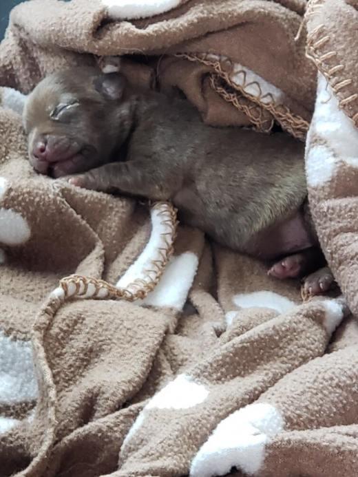 Bonnie 4 puppy