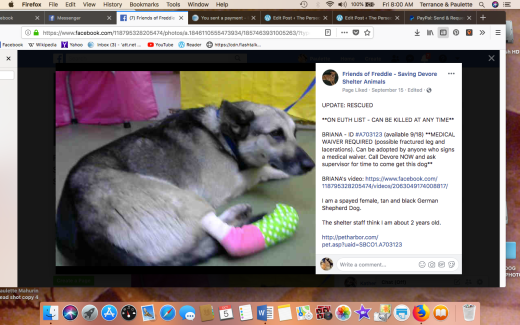 Brianna 1 rescued Screen Shot 2018-10-05 at 8.00.47 AM
