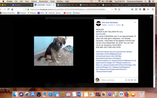 Brownie 4 rescued Screen Shot 2018-10-30 at 8.09.28 PM
