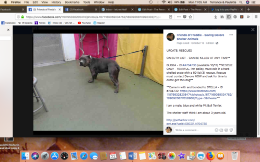 Bubba rescued Screen Shot 2018-10-22 at 11.05.13 AM