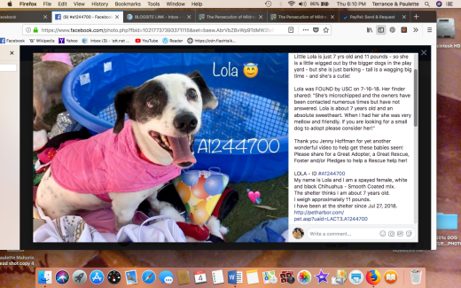 Lola 3 rescued Screen Shot 2018-10-04 at 6.10.13 PM