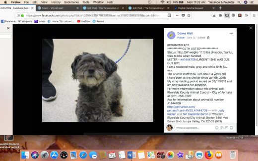 MISTER RESCUED Screen Shot 2018-10-22 at 11.32.17 AM