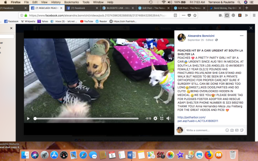 Peaches 2 rescued Screen Shot 2018-10-05 at 7.53.26 AM