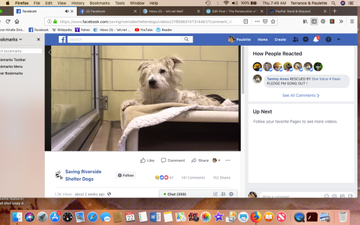 Boycie rescued shelter photo Screen Shot 2018-11-22 at 7.49.10 AM