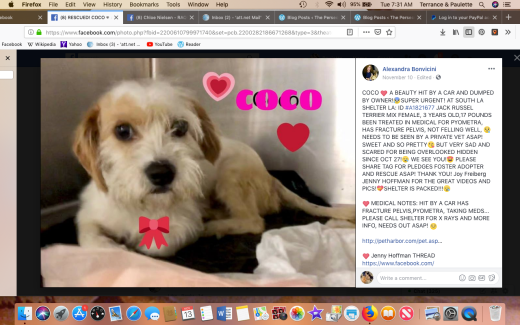 Coco 8 rescued 2018-11-13 at 7.31.41 AM