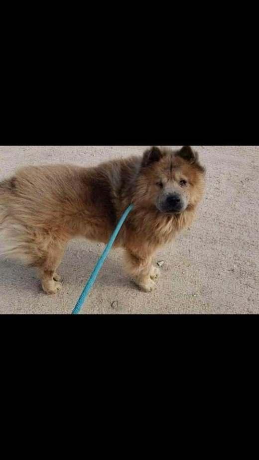 Frankie Pet ID #430270 LF chow freedom
