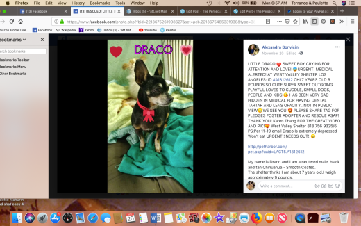 Little Draco rescued Screen Shot 2018-11-26 at 6.57.40 AM