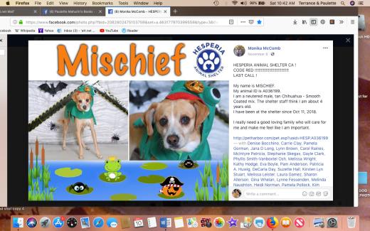 Mischief rescued