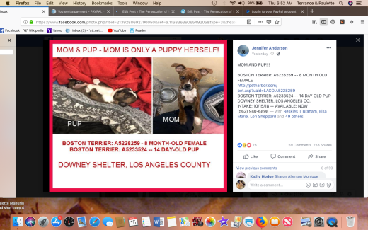 Mom & pup Boston terrier A5228259 aka JoEllen Moses RESCUED 2018-11-15 at 6.52.32 AM