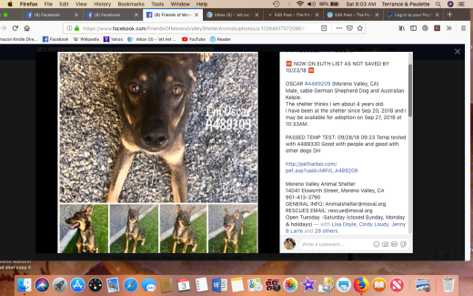Oscar 1 rescued Screen Shot 2018-11-03 at 8.03.07 AM