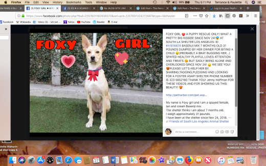 Foxy rescued Screen Shot 2018-12-27 at 5.11.23 PM