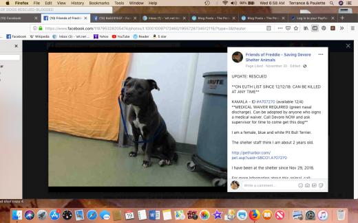 Kamala rescued Screen Shot 2018-12-19 at 6.58.16 AM