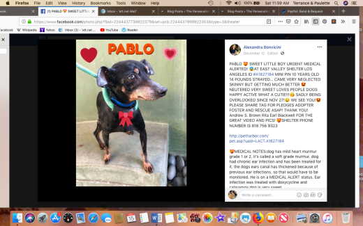 Pablo 2 rescued