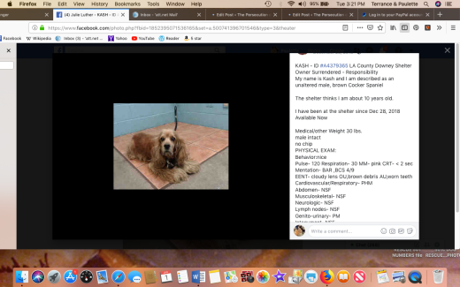 Kash rescued Screen Shot 2019-01-01 at 3.21.05 PM