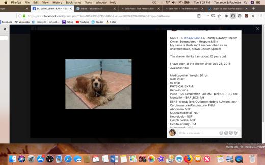 Kash rescued Screen Shot 2019-01-01 at 3.21.05 PM