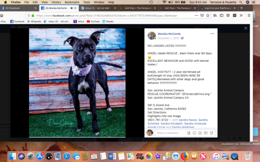 angel 3 rescued screen shot 2019-01-20 at 9.03.16 am