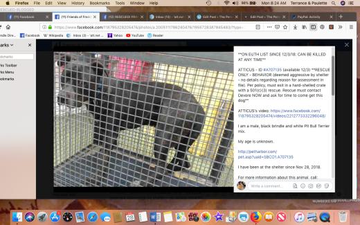 atticus rescued screen shot 2019-01-28 at 8.24.00 am