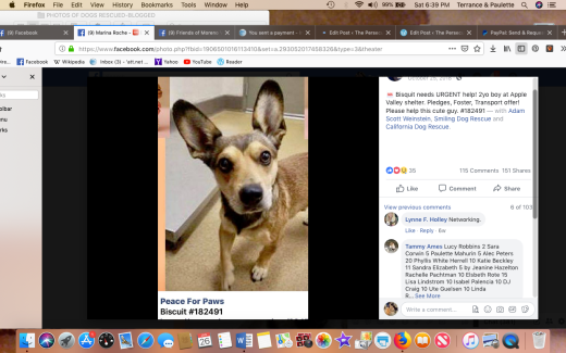 biscuit 3 rescued screen shot 2019-01-26 at 6.39.44 pm