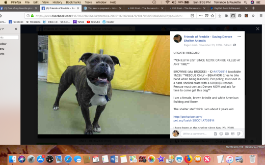 brownie 5 rescued screen shot 2019-01-13 at 3.03.41 pm