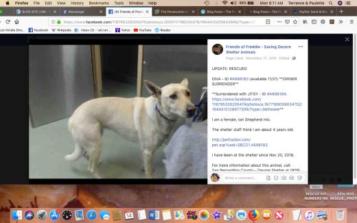 diva rescued screen shot 2019-01-14 at 8.11.19 am