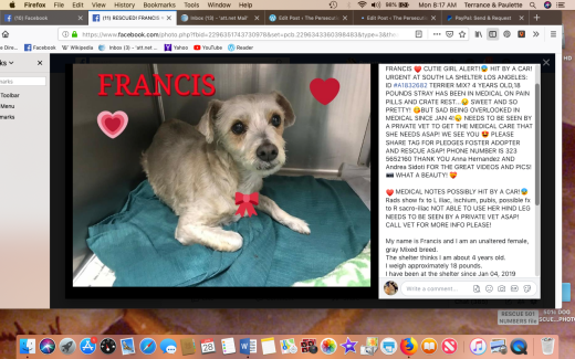 francis 1 rescued screen shot 2019-01-28 at 8.17.20 am