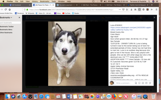 luna 4 rescued screen shot 2019-01-28 at 9.36.15 am