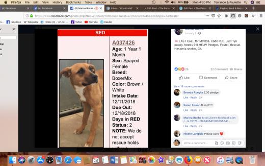 matilda 2 rescued screen shot 2019-01-28 at 4.30.59 pm