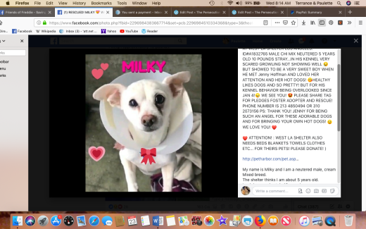 milky rescued 2019-01-23 at 8.14.06 am