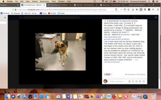 noland 2 rescued 2019-01-18 at 10.56.33 am