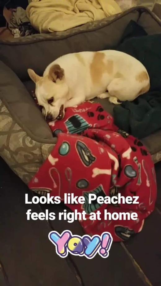 peachez freedom