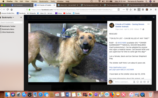 ruby 3 rescued screen shot 2019-01-28 at 9.25.12 am