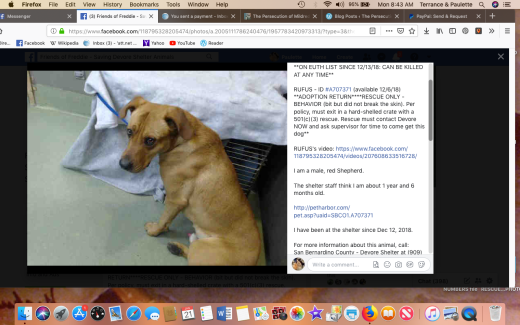 rufus 4 rescued screen shot 2019-01-21 at 8.43.15 am