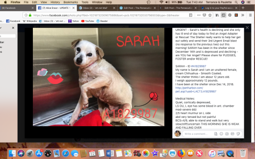 sarah 2 rescued screen shot 2019-01-22 at 7.43.25 am