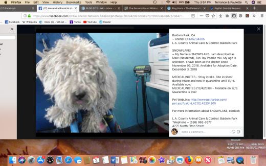 snowflake rescued screen shot 2019-01-03 at 3.57.27 pm