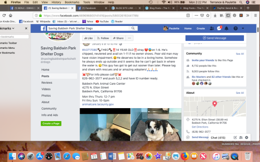 theo kennel info screen shot 2019-01-21 at 2.22.36 pm