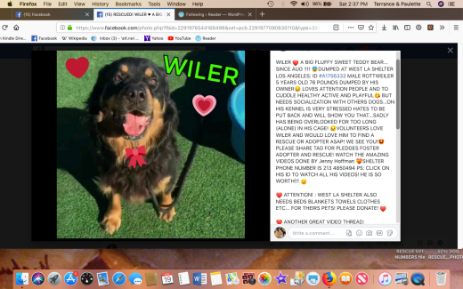 wiler rescued screen shot 2019-01-19 at 2.37.52 pm